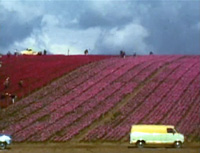 Martha Rosler - Flower Fields (Color Field Painting), c. 1975, Courtesy of the artist and EAI, New York
